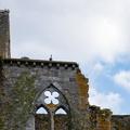 Balade dans les ruines de l'Abbaye d'Aulne (THUIN)